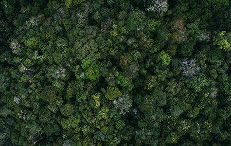 The Amazon Ablaze