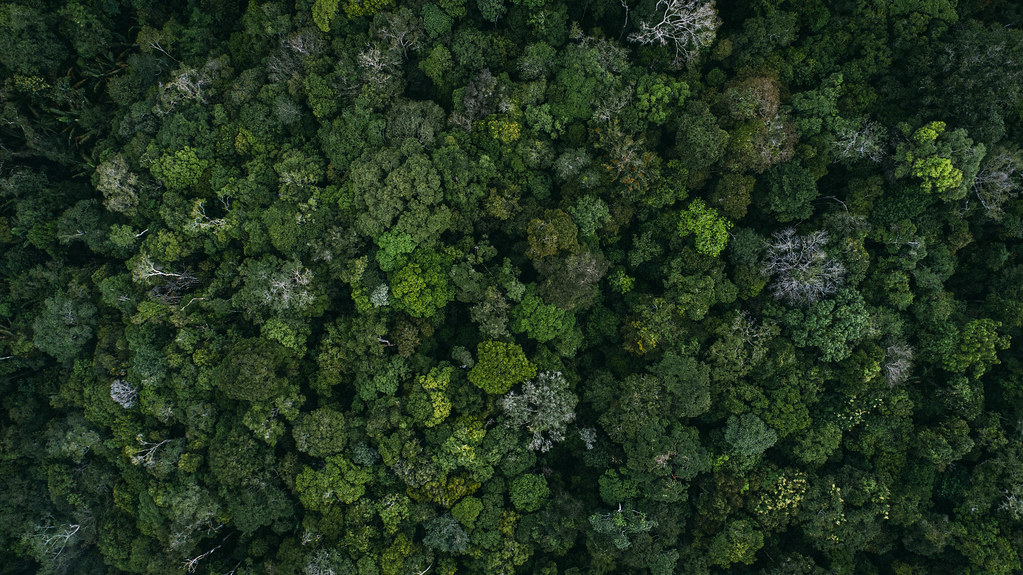 Overhead scenic of the Amazon rainforest during the 6 River Run expedition, Manaus, Brazil on the 29th March 2017