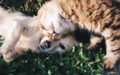 Pet Benefits